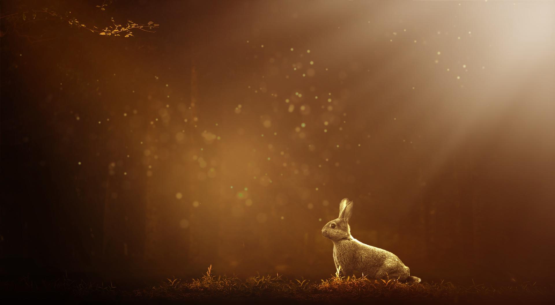 cresterea iepurilor
