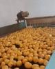 Cartofi import la camion 21t