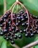 Fructe Soc
