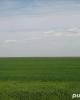 Dau in arenda-concesiunez teren agricol bio in tulcea 1000 ha