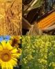 Ingrasamant Natural Foliar, Biostimulator, Fungicid - HERBAGREEN