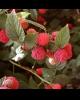 Vindem butasi diverse plante pentru infiintare plantatii!