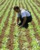 credit în sectorul agricol