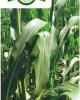 HERBAGREEN - Ingrasamant Natural Foliar, Biostimulator, Fungicid