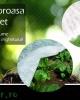 Folie Microporoasa Antiinghet