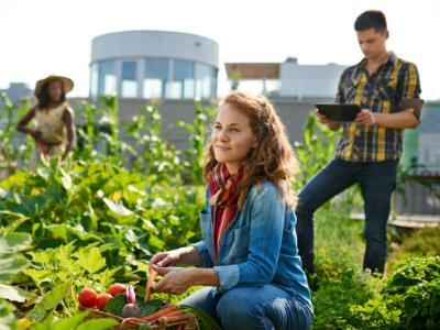 ce-tratamente-fitosanitare-se-recomanda-in-culturile-de-legume