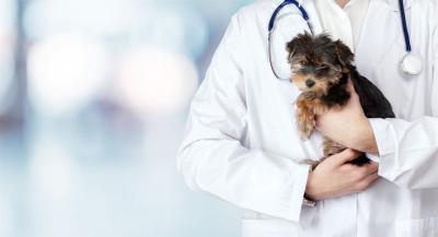 guvern-10000-de-leiluna-pentru-medicii-veterinari