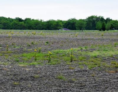 ins-revine-cu-vesti-pozitive-valoarea-productiei-ramurii-agricole-a-crescut