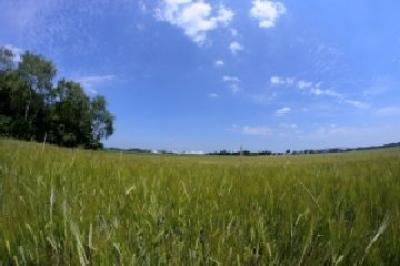 guvernul-incearca-stimularea-absorbtiei-de-fonduri-ue-pentru-agricultura