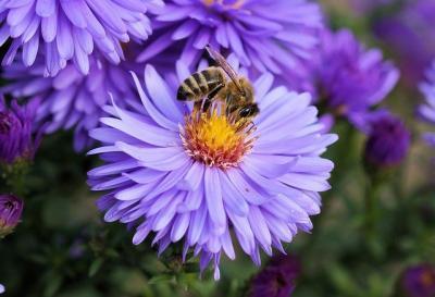 aca-anul-2021-unul-bun-pentru-apicultori
