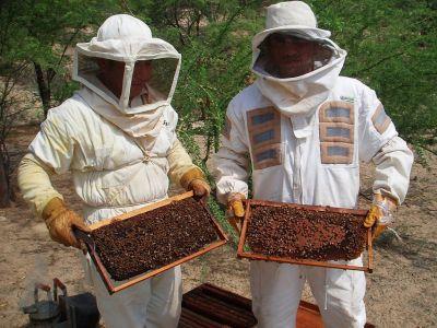 apicultorii-solicita-pastrarea-albinei-in-viitoarea-lege-a-zootehniei