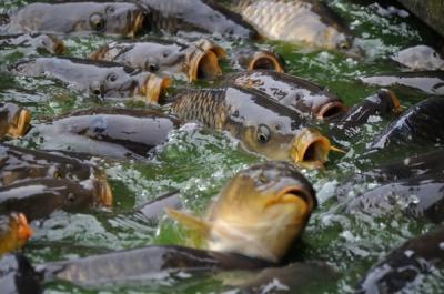 un-milion-de-lei-in-plus-pentru-acvacultura