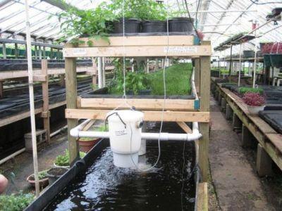 agricultura-acvaponica-o-solutie-pentru-a-obtine-productii-mari-de-pe-suprafete-mici