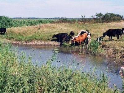 masuri-pentru-protejarea-animalelor-de-efectele-caniculei