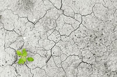 aff-suntem-in-pragul-dezastrului-agricol