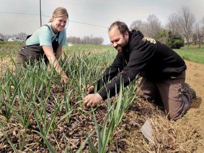 etapele-instalarii-tinerilor-fermieri-care-vor-sa-obtina-sprijin-financiar-nerambursabil