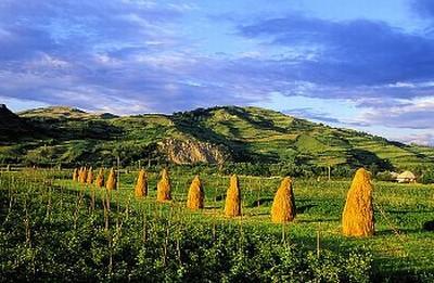 cu-cat-a-crescut-productia-agricola-in-2011