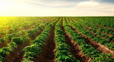 fost-eurodeputat-9-motive-pentru-care-sustinem-agricultura-bio