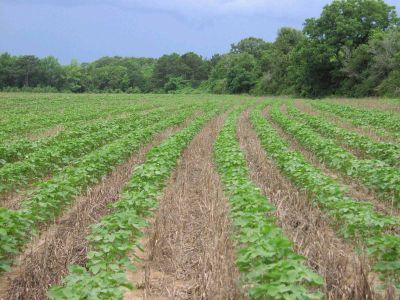simpozionul-agriculturii-conservative-va-avea-loc-la-cluj-pe-2-si-3-mai