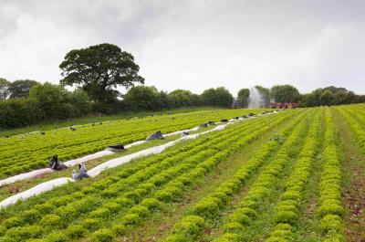 austria-e-campioana-agriculturii-ecologice-din-europa