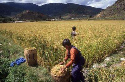cine-va-fi-prima-tara-din-lume-cu-o-agricultura-ecologica-suta-la-suta
