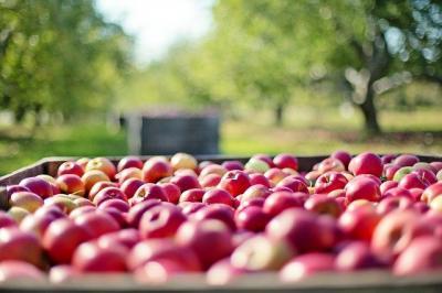 agricultura-ecologica-inseamna-sute-de-euro-in-ajutoare-per-hectar