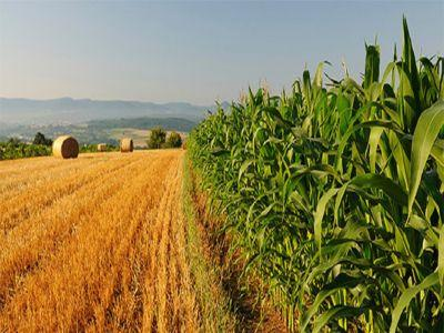 crestere-spectaculoasa-a-profiturilor-obtinute-in-agricultura