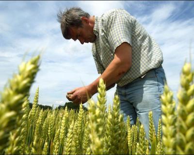 agricultura-a-contribuit-din-plin-anul-trecut-la-mentinerea-economiei-pe-plus