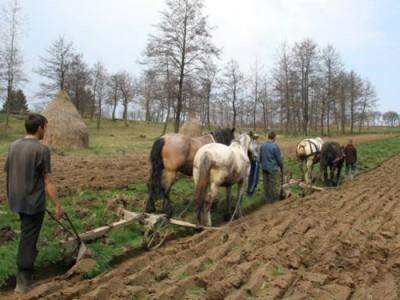 proiect-european-adresat-persoanelor-care-fac-agricultura-de-subzistenta-in-judetul-braila