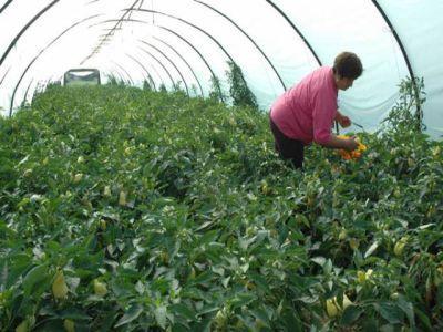 APIA: 28 noiembrie, termenul limita pentru depunerea cererilor pentru imbunatatirea calitatii produselor agricole ecologice