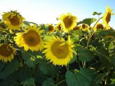 agricultura-organica-si-cea-bazata-pe-biotehnologii-posibilul-viitor-agricol-al-romaniei