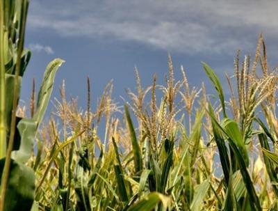 de-la-productie-la-agri-business-marea-provocare-a-agriculturii-romanesti-in-urmatoarea-perioada