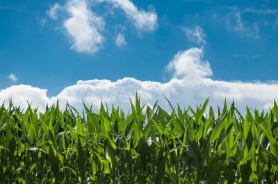 saltul-catre-productivitate-in-agricultura
