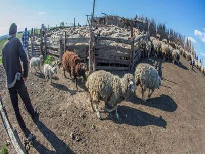 fermierii-afectati-de-animalele-salbatice-vor-fi-despagubiti-integral-din-fonduri-ue