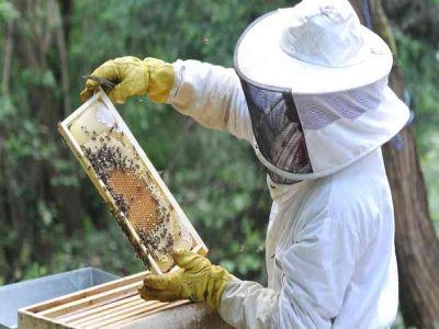 apicultorii-mai-au-la-dispozitie-doua-saptamani-pentru-a-si-depune-cererile-pentru-subventii