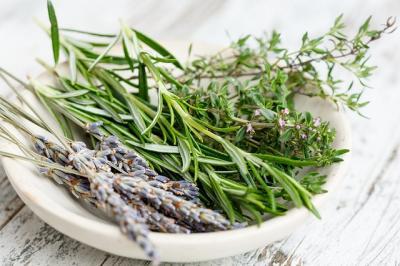 madr-cultivatorii-de-cimbru-ajutor-de-3400-de-euro-per-hectar
