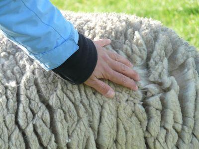 a-fost-aprobat-ajutorul-de-minimis-pentru-lana