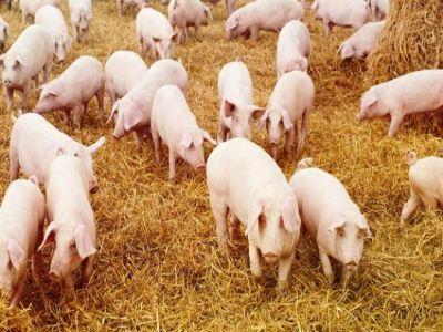 o-noua-schema-de-ajutor-pentru-crescatorii-de-animale