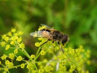 ce-aplica-restrictii-la-utilizarea-pesticidelor-neonicotinoide-daunatoare-pentru-albine