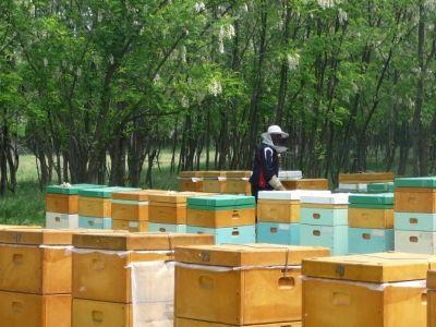 combaterea-daunatorilor-naturali-ai-stupilor-de-albine