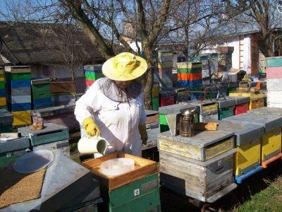 s-a-stabilit-valoarea-sprijinului-financiar-acordat-in-cadrul-programului-national-apicol