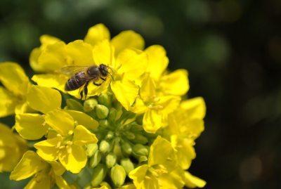 opinia-lapar-cu-privire-la-interzicerea-insecticidelor-pe-baza-de-neonicotinoide