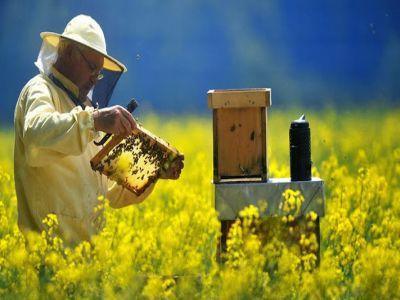 programul-national-apicol-ar-putea-fi-aprobat-saptamana-aceasta
