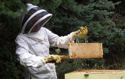 apicultorii-vor-primi-un-ajutor-de-minimis-de-50-de-lei-pentru-fiecare-familie-de-albine