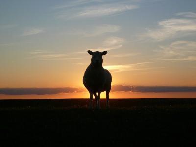 ancheta-privind-oile-neincinerate-recuperate-de-pe-nava-queen-hind