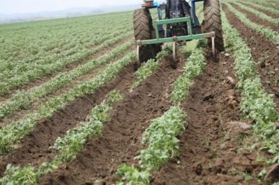 anf-porneste-controalele-la-producatorii-de-cartofi