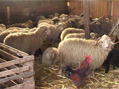 masuri-pentru-protejarea-animalelor-in-conditii-de-ger