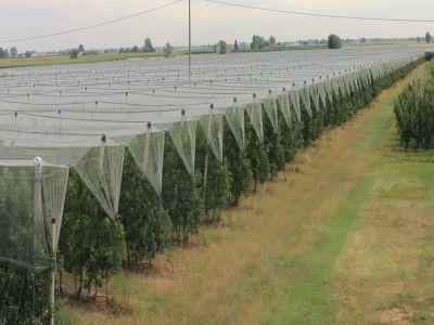 pagube-importante-in-culturule-agricole-evitate-cu-ajutorul-rachetelor-antigrindina