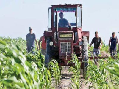 fermierii-vor-intra-in-posesia-subventiilor-in-acelasi-an-in-care-sunt-efectuate-lucrarile-in-agricultura