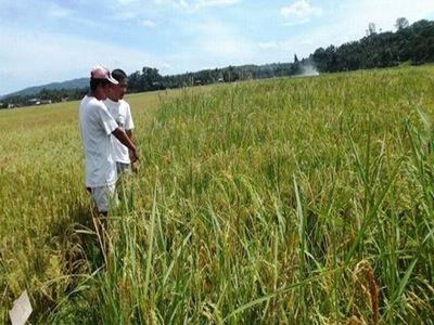 saptamana-aceasta-se-desemneaza-fermierii-care-vor-fi-inclusi-in-esantionul-de-control